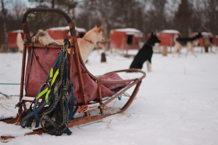 Husky Adventure Røros Norway Alaskan huskies winter wonderland Trøndelag