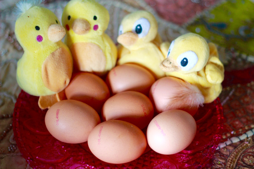 eicode eiercode code ei ei code biologisch ei diervriendelijk ei dierenwelzijn kip eieren