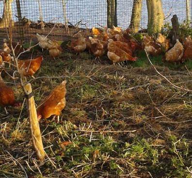 Biologische kip en vegetarische kip bij Puur! restaurants