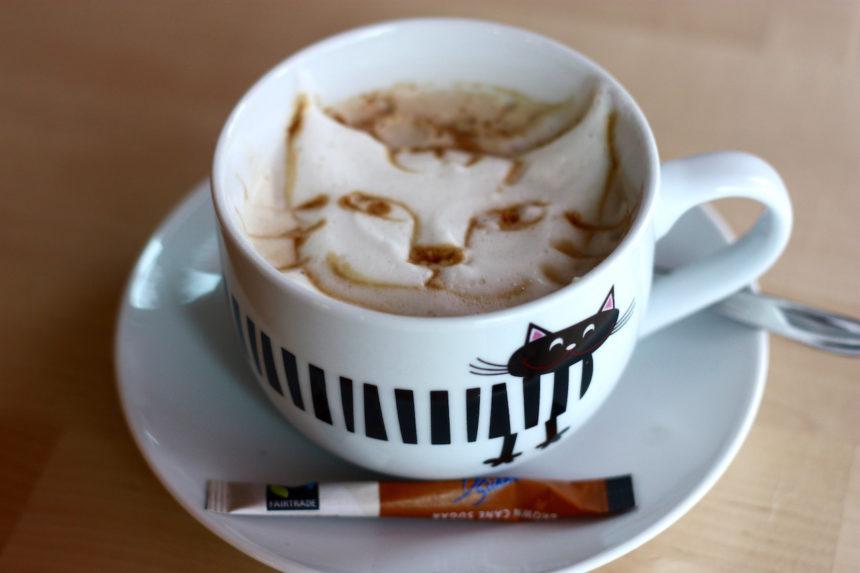 Café Miao Kopenhagen kattencafe