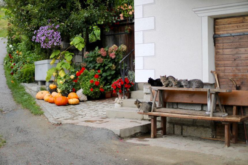 poezen boerderij wandelen Kastanjeroute Zuid-Tirol