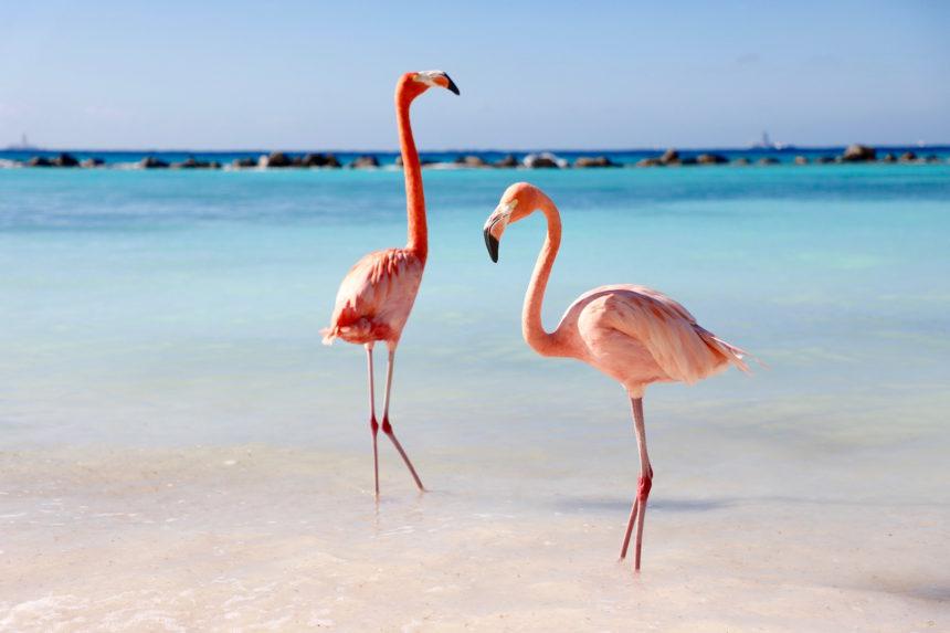 Flamingo's Renaissance Island Aruba travel blog flamingo photography