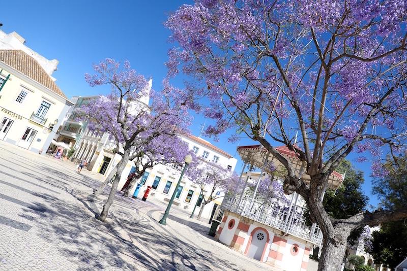 Faro algarve tips jacaranda boom
