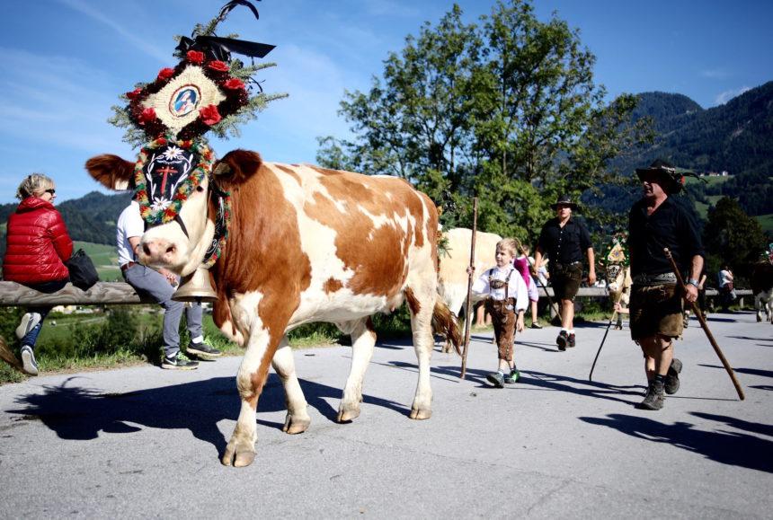 Almabtrieb Tirol Jeannette van Mullem puur uit eten puuruiteten reizen reisjournalist reisfotograaf culinair journalist acsi freelife