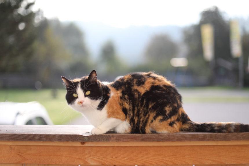 Kat bij camping Stadlerhof