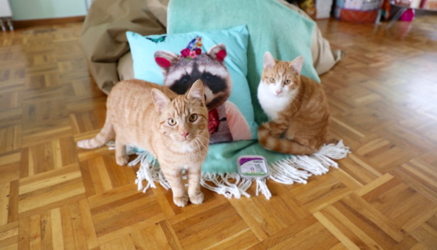 Yarrah biologisch kattenvoer puuruiteten