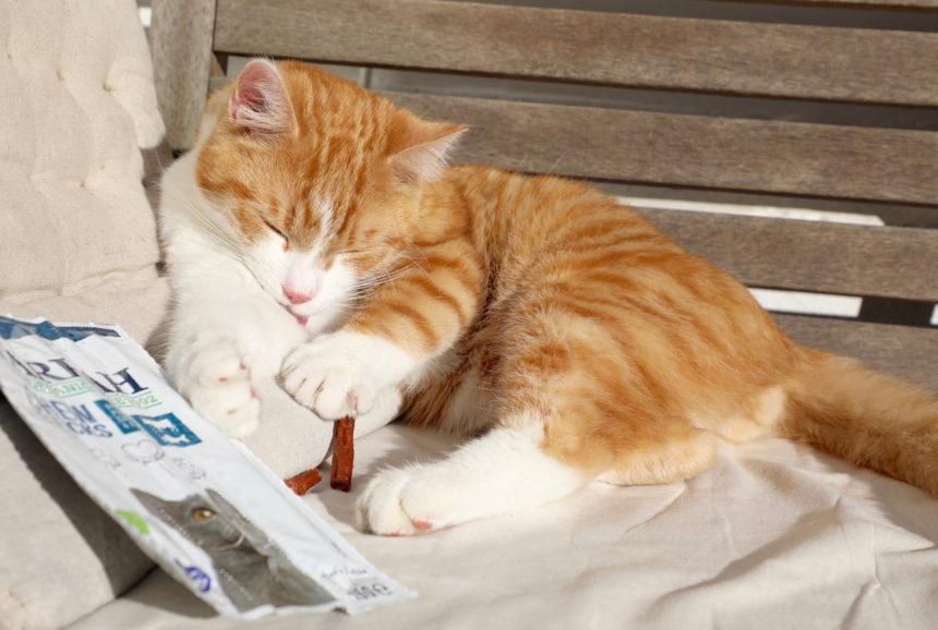 biologisch kattenvoer yarrah