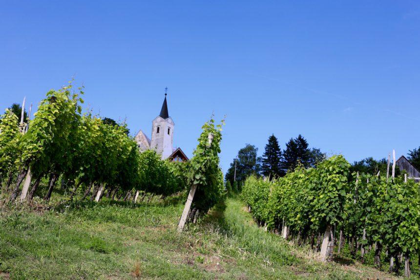 Kroatische wijn in Plesivica
