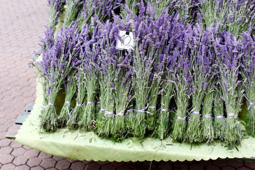 Zagreb markt lavendel