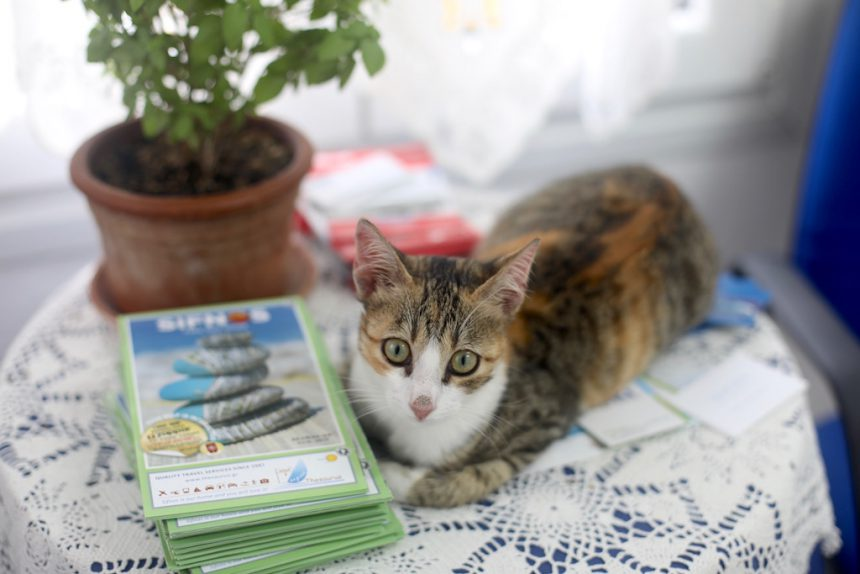 Sifnos kat cat cats