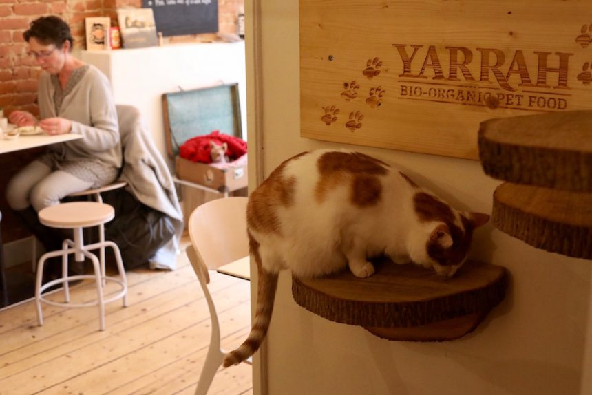 Biologisch kattenvoer Yarrah kattencafe