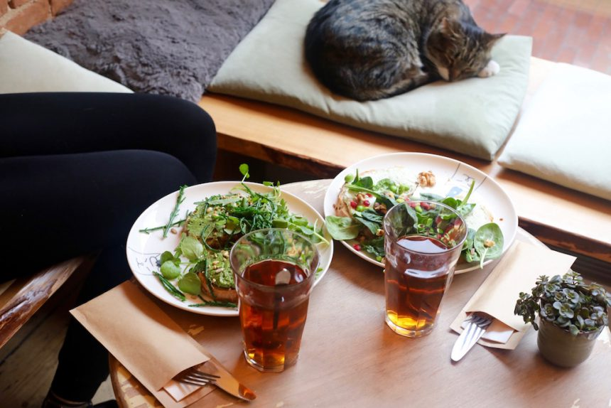 Vegetarisch en vegan eten Kattencafe balthazar nijmegen