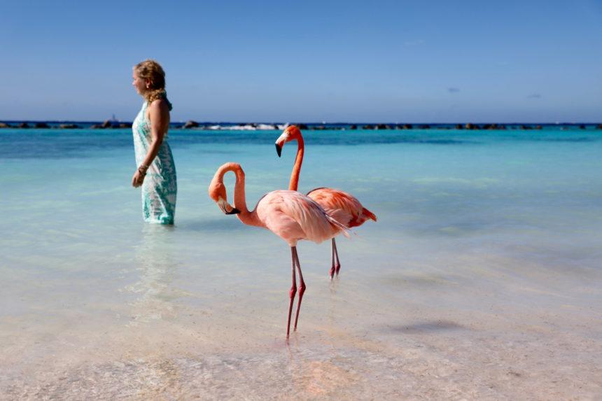 Aruba wellness