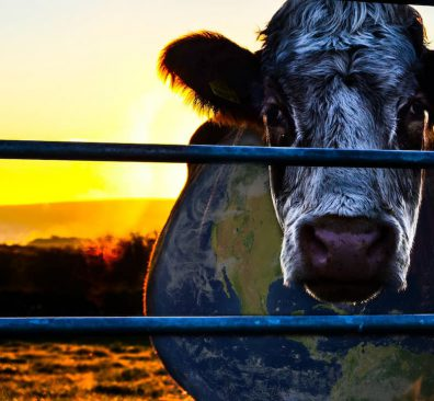 Cowspiracy, food documentaire en duurzaamheid
