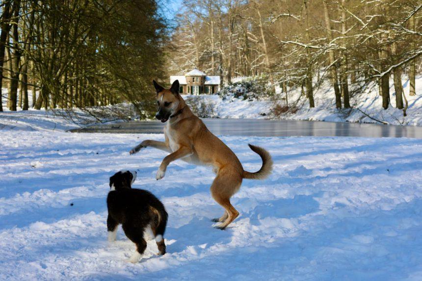 biologisch hondenvoer Yarrah duurzaam