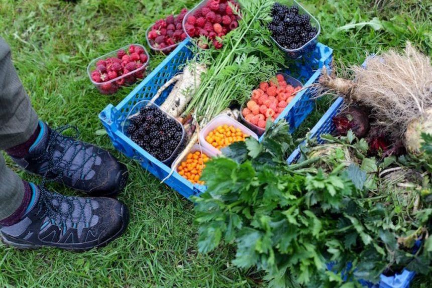 5x tips vega sporten eiwitten plantaardig eten voeding